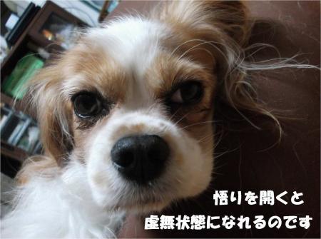 07_convert_20131008172842.jpg