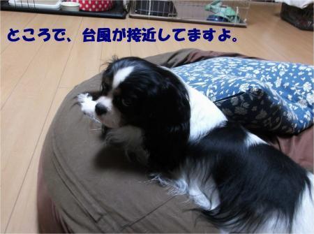 07_convert_20131015170836.jpg