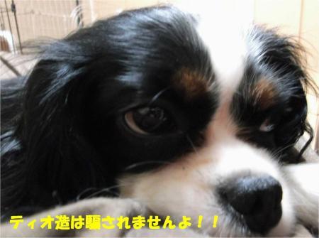 07_convert_20131016165108.jpg