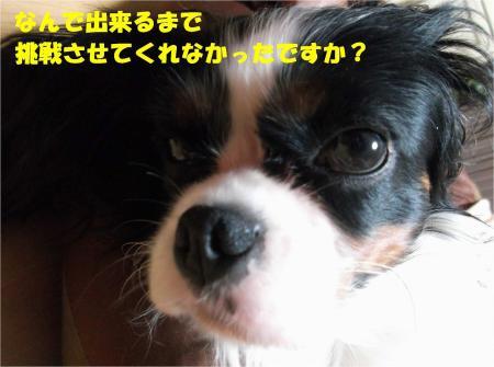 07_convert_20131023175838.jpg