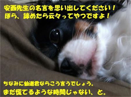 07_convert_20131025180034.jpg