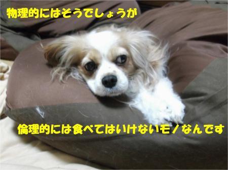 08_convert_20130329173030.jpg