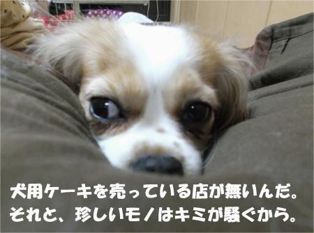 08_convert_20130403174658.jpg