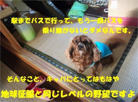 08_convert_20130410181049.jpg