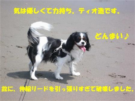 08_convert_20130415172817.jpg