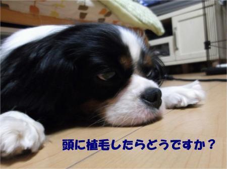 08_convert_20130606175901.jpg