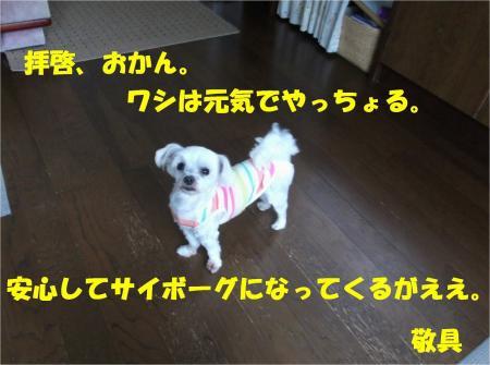 08_convert_20130612171251.jpg