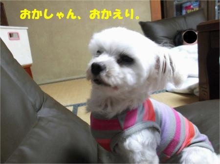 08_convert_20130626173504.jpg