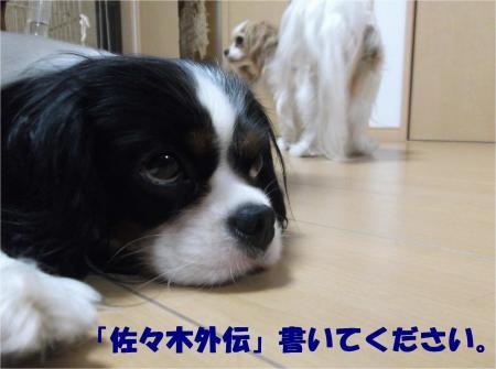08_convert_20130627171503.jpg