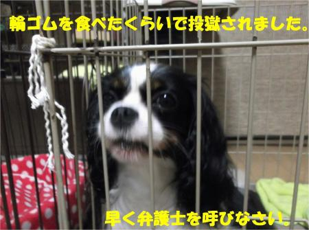 08_convert_20130719175339.jpg