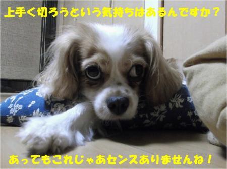 08_convert_20130801174843.jpg