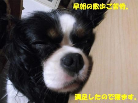08_convert_20130805175738.jpg