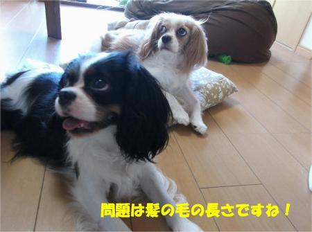 08_convert_20130807174547.jpg