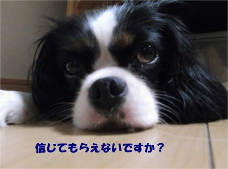 08_convert_20130903175239.jpg