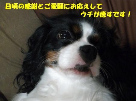 08_convert_20130920184427.jpg