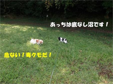 08_convert_20130923133421.jpg