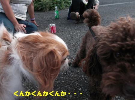 08_convert_20130930093434.jpg