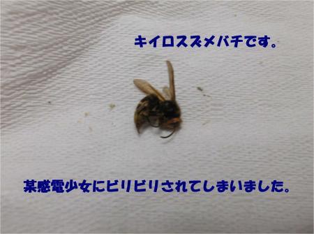 08_convert_20131007174156.jpg