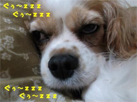 08_convert_20131009181700.jpg