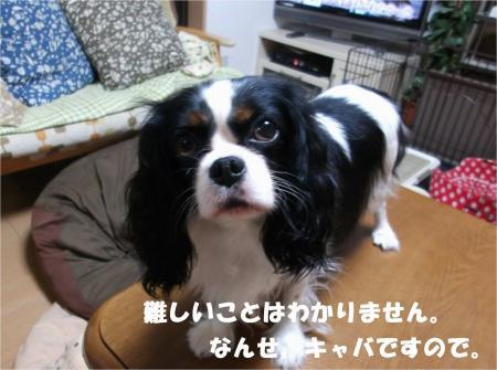 08_convert_20131024183441.jpg