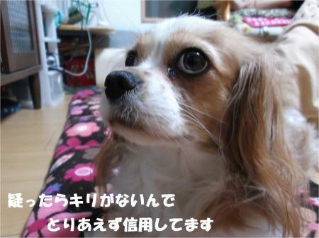 08_convert_20131030165438.jpg