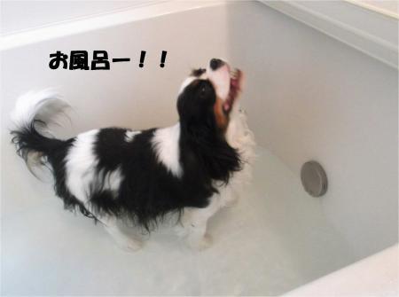 09_convert_20130401181713.jpg