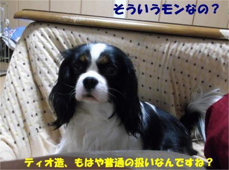 09_convert_20130402171420.jpg