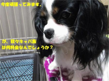 09_convert_20130410181104.jpg