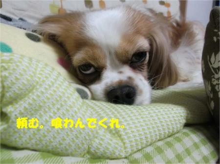 09_convert_20130417183455.jpg
