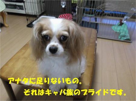 09_convert_20130730180544.jpg