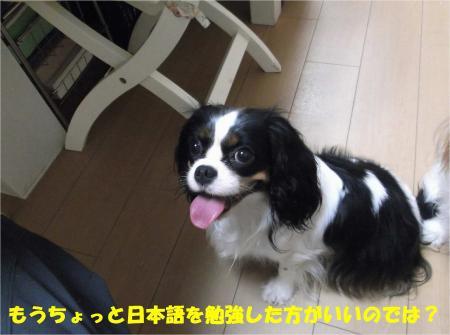 09_convert_20130904174713.jpg