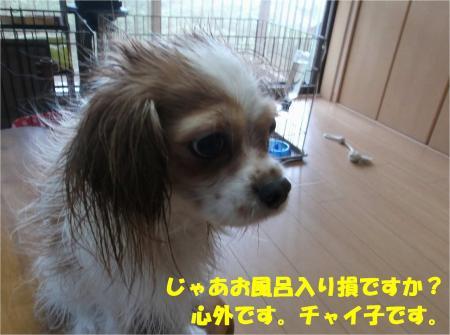 09_convert_20130909170808.jpg