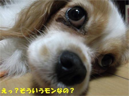 09_convert_20130912182729.jpg