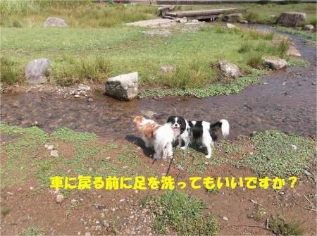 09_convert_20130924171451.jpg
