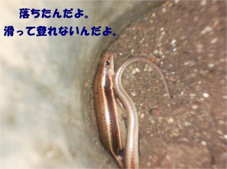 09_convert_20130926161216.jpg