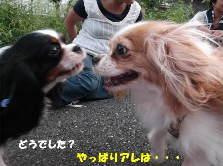 09_convert_20130930093447.jpg