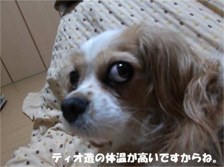 09_convert_20131023175902.jpg