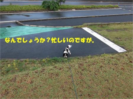 09_convert_20131028174318.jpg