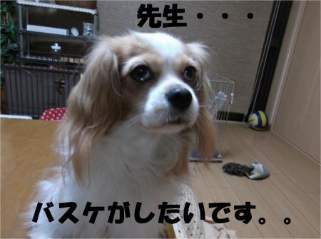 08_convert_20131025180044[1]