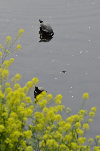 春-10_R