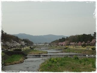 1お花見2013