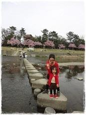 5お花見2013
