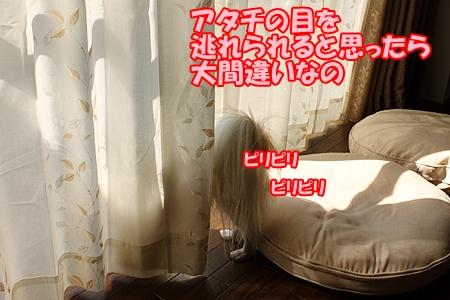 1_2013101410443784c.jpg