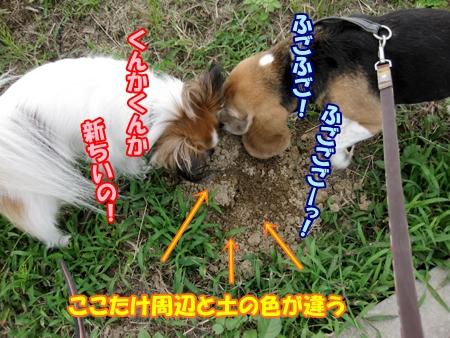 4_20131010192700ec8.jpg