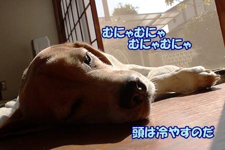 6_20131014104417b67.jpg