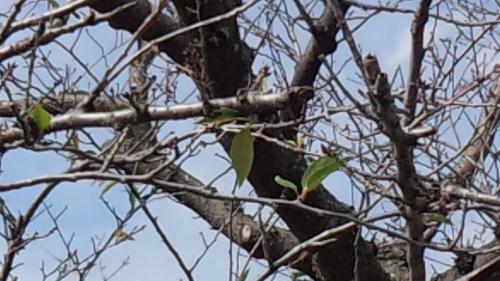 2013-9桜1
