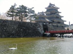 松本城白鳥
