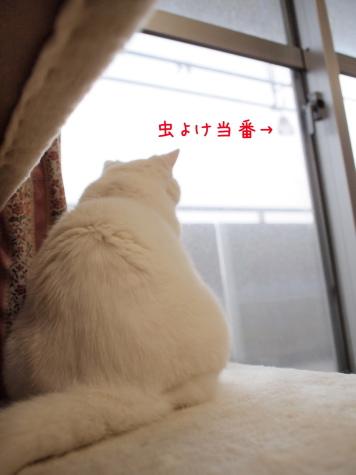 IMG_4909urabanashi.jpg