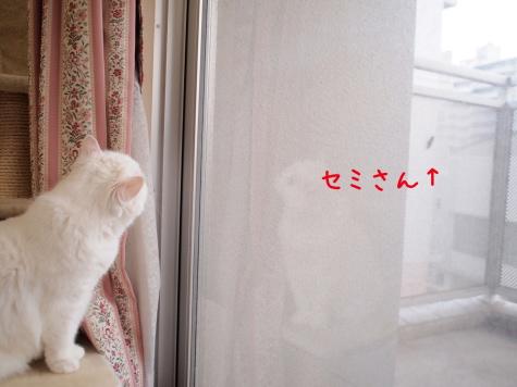 IMG_4912urabanashi.jpg