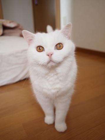 P7208850urabanashi.jpg